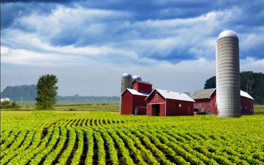 Photo of Farm and corn stalk